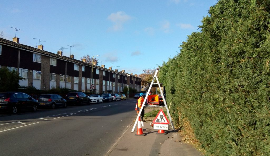 French Horn Lane hedge being pruned